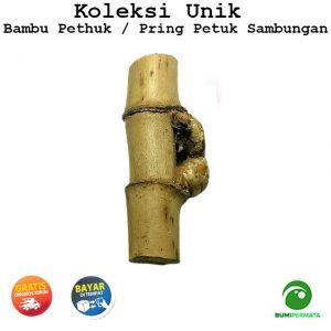Pring Petuk Bambu Ruas Bertemu