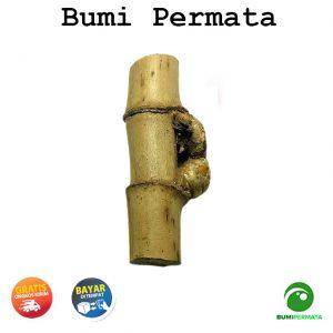 Pring Petuk Bambu Ruas Bertemu 1